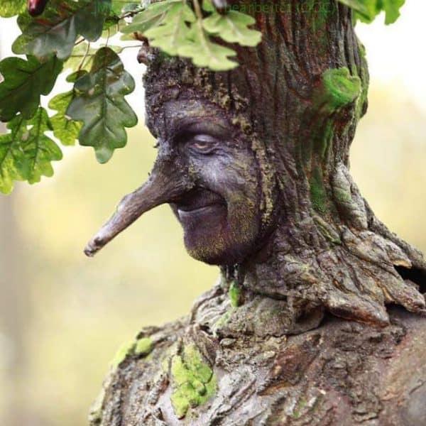 Quercus der Baum